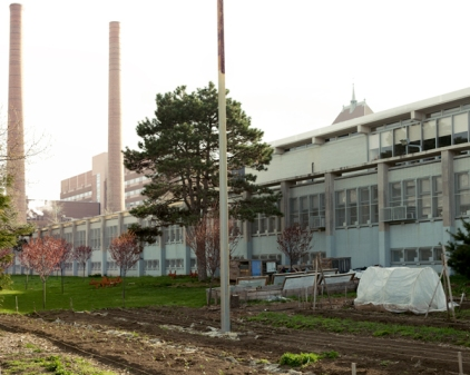 Youth Farm at The High School for Public Service, Brooklyn