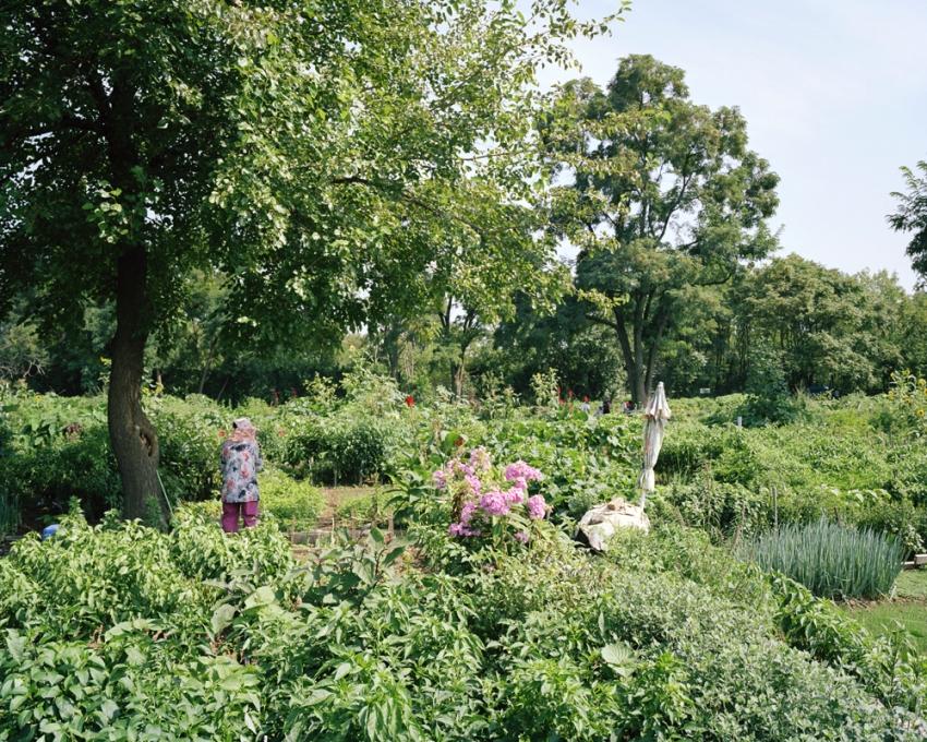 Evergreen Community Garden, Queens