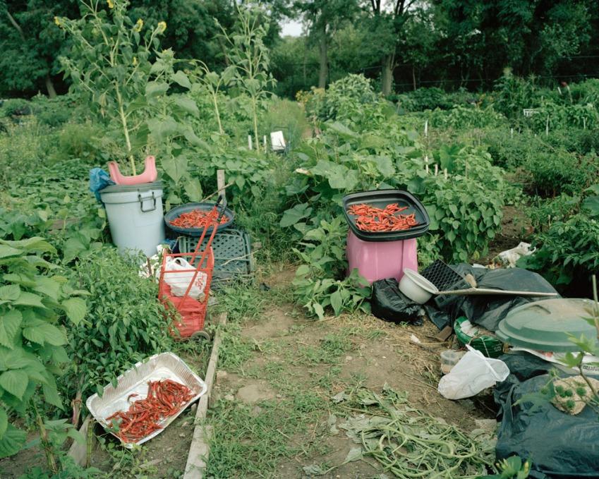 Kissena Corridor Community Garden