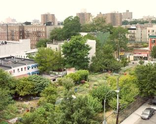 Taqwa Community Farm, Bronx