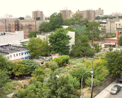 Taqwa Community Farm, Bronx