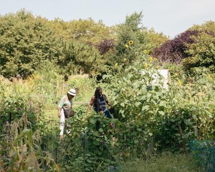 Hattie Carthan Community Garden, Brooklyn