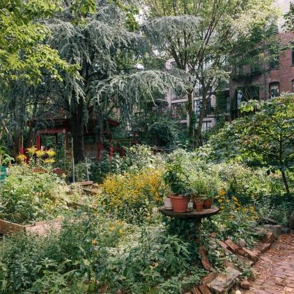 A LUNGS garden